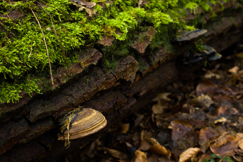 Tronco al Funghi
